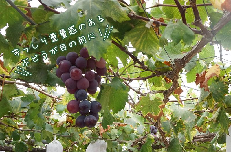 中野果実園1
