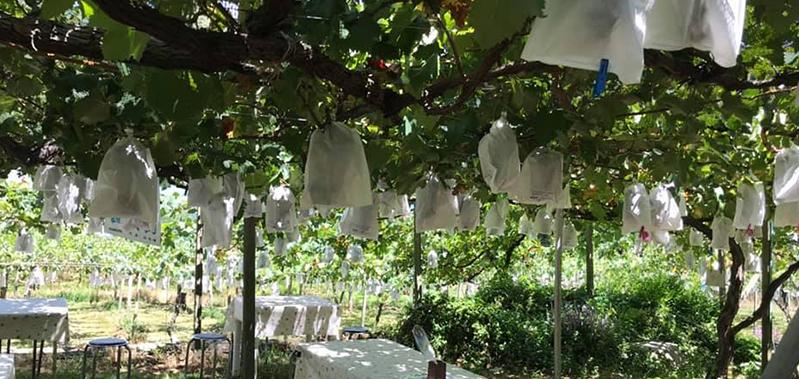 田中果樹園のフルーツの作り出す木漏れ日は格別